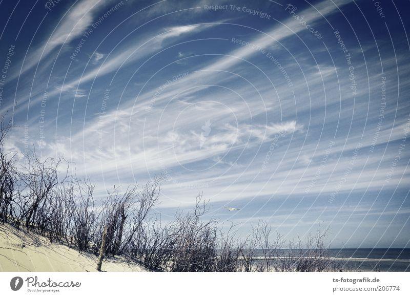 Kreative Pinselführung Ferien & Urlaub & Reisen Ferne Sommerurlaub Strand Meer Umwelt Natur Landschaft Himmel Wolken Horizont Klima Wetter Schönes Wetter Wind
