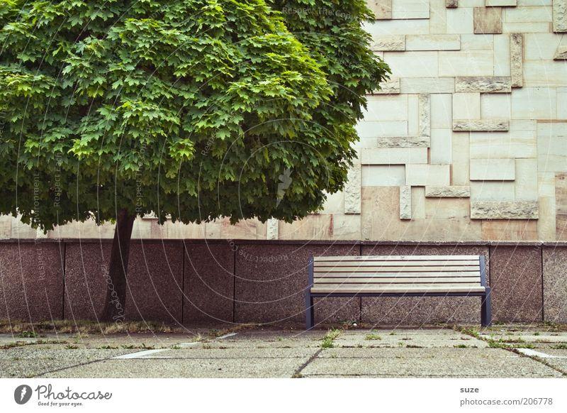 Bankgeheimnis Umwelt Natur Pflanze Klima Baum Park Platz Gebäude Architektur Mauer Wand Fassade Wege & Pfade Stein Beton Holz Wachstum authentisch trist grau