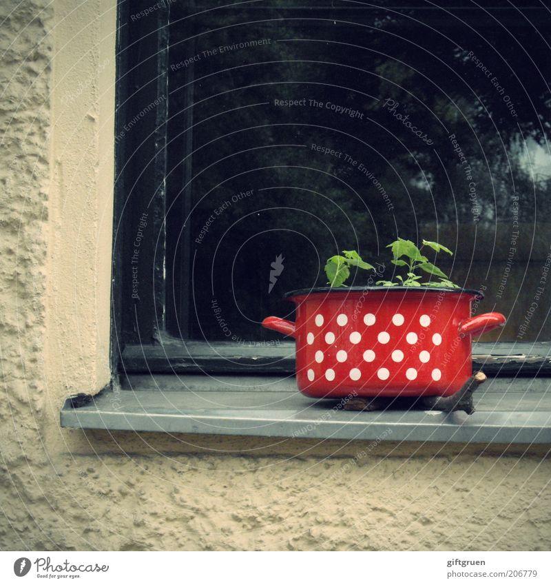 stadtpflanze Pflanze rot Haus Wand Fenster Mauer lustig verrückt Fassade Wachstum Punkt außergewöhnlich Kreativität Idee seltsam klug