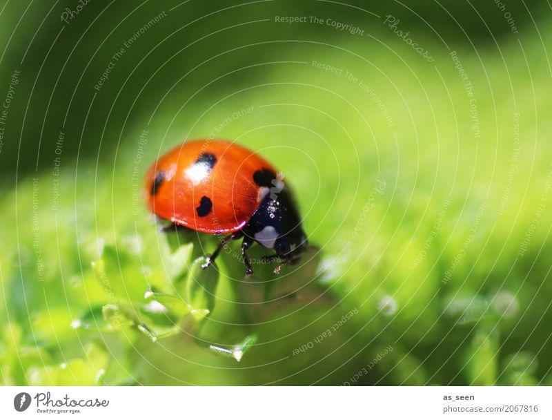 Sonnenbad harmonisch Tier Käfer Marienkäfer 1 fliegen krabbeln einfach klein niedlich positiv grün rot Gefühle Fröhlichkeit Zufriedenheit Frühlingsgefühle
