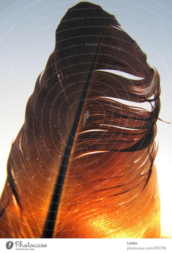 Flying to the sun schwarz gelb Freiheit Stimmung braun gold weich Feder Symbole & Metaphern Schönes Wetter Leichtigkeit Gefühle Tier durchscheinend federartig