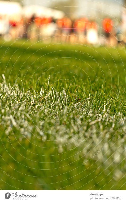 fussballplatzrasen Sport Rasen Sportrasen Linie Kreide weiß Schilder & Markierungen Spielfeld Spielfeldbegrenzung Fußballplatz Nahaufnahme Bodenmarkierung