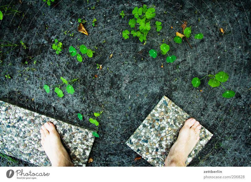 Clustergärtnerei Pflanze Frühling Garten Juni Sommer Wachstum Beet Fuß stehen Barfuß sprößlinge Erde Boden Jungpflanze Bodenplatten Vogelperspektive Grünpflanze