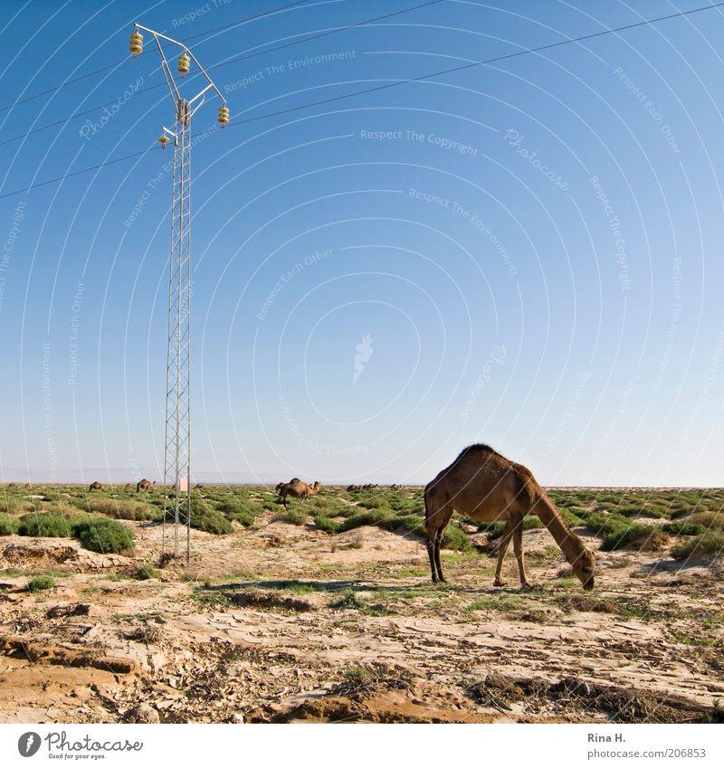 Strom für alle Ferien & Urlaub & Reisen Tourismus Abenteuer Ferne Energiewirtschaft Umwelt Natur Landschaft Erde Sand Himmel Horizont Gras Sträucher Tunesien