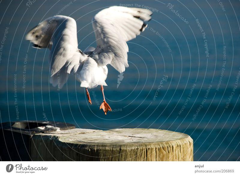 Möwe Natur Wasser blau Tier Leben Freiheit Holz Kraft Vogel Tierfuß fliegen Flügel wild Wildtier Symbole & Metaphern