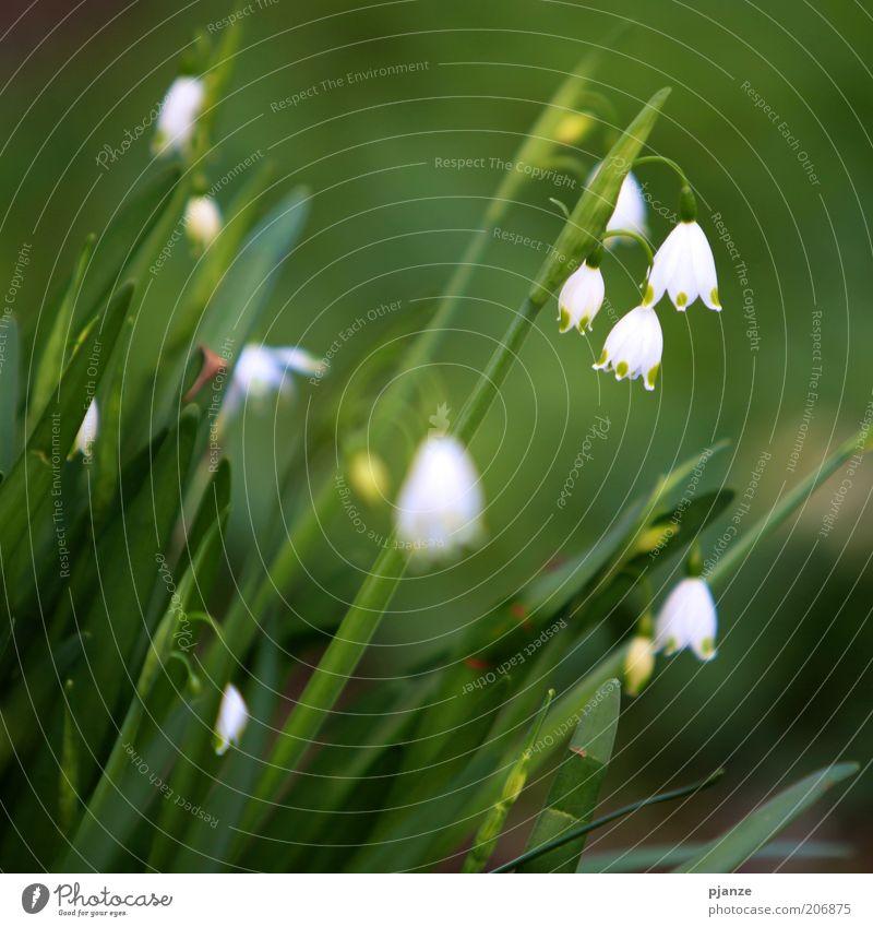 Pflücken verboten. [LUsertreffen 04 10] Natur weiß grün Pflanze Blüte Frühling Umwelt frisch Blume Symbole & Metaphern Schönes Wetter Grünpflanze