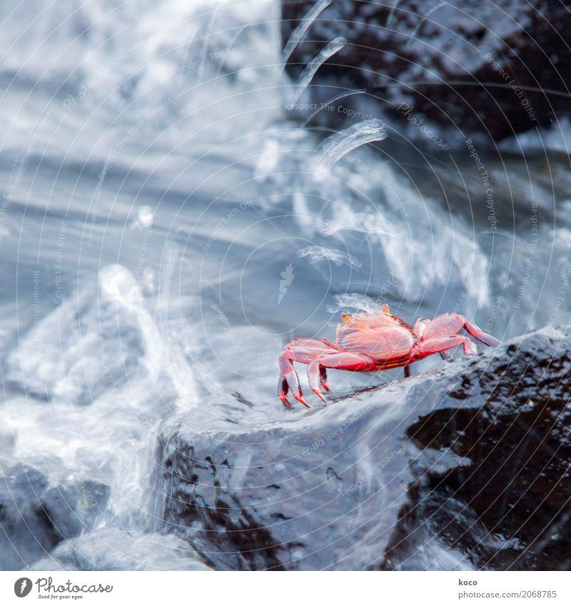 Heute schon ein Schwimmerchen gemacht? Umwelt Natur Tier Wasser Wassertropfen Sommer Wellen Küste Meer Klippe Krabbe 1 Stein Schwimmen & Baden warten