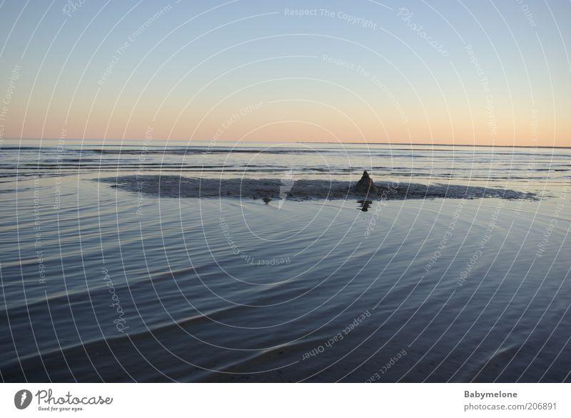 gestrandet Natur Wasser schön Meer Sommer Strand Ferien & Urlaub & Reisen Ferne Freiheit Zufriedenheit Stimmung Küste Horizont Ostsee harmonisch Abenddämmerung