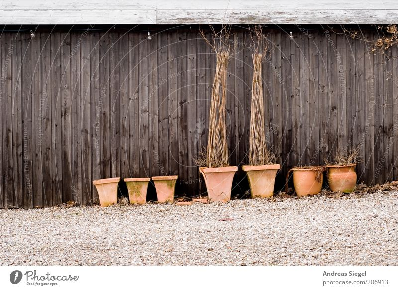 Tondern Pflanze Wand Holz Stein Mauer braun trist Sträucher Vergänglichkeit trocken Scheune Blumentopf Grünpflanze Kübel Holzwand Holzhaus
