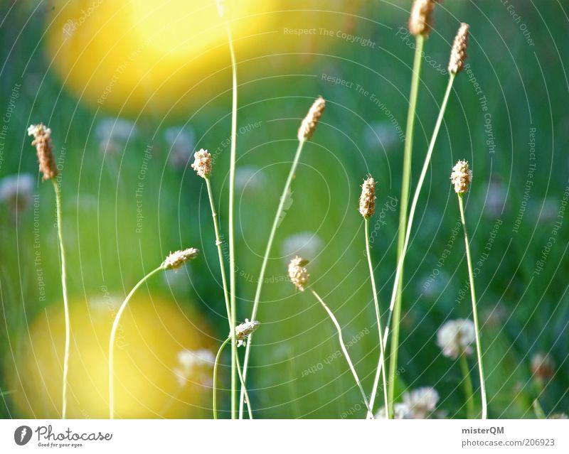 sound of silence. Umwelt Natur Landschaft Pflanze ästhetisch Blume ruhig Zufriedenheit Erholung natürlich gelb Unschärfe grün Wiese unberührt Blühend