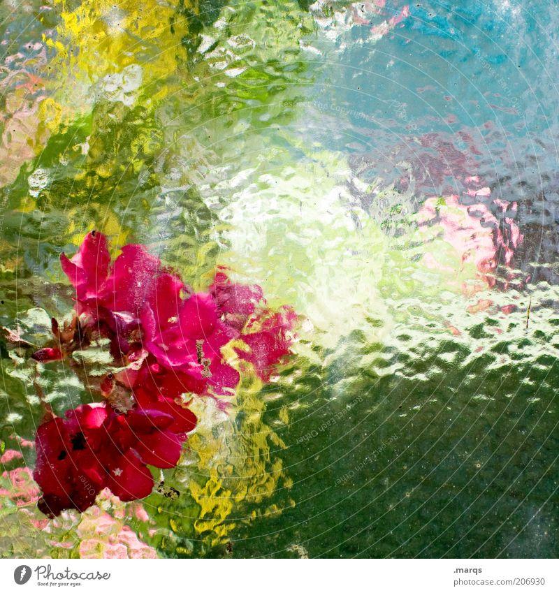 Im Juli Pflanze Sommer Schönes Wetter Blüte Blühend leuchten frisch schön blau gelb grün rot Gefühle Farbe Glasscheibe Scheibe unklar Farbfoto mehrfarbig