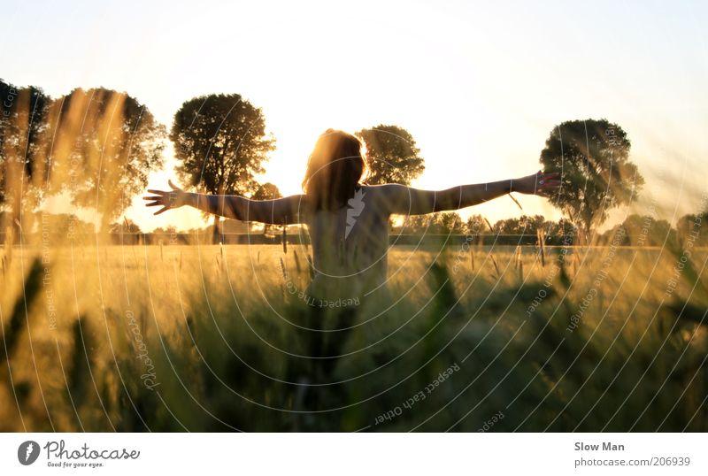 Kornrauschen... harmonisch Sonnenbad feminin Junge Frau Jugendliche Landschaft Feld Erholung frei gold Freude Glück Rückansicht Kornfeld Warmes Licht Wärme