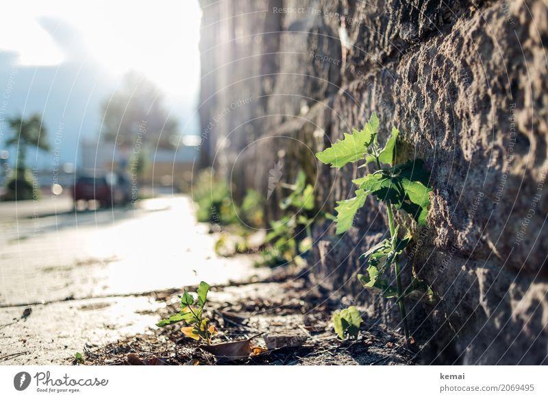 AST10 | Großstadtdschungel Umwelt Natur Pflanze Blatt Grünpflanze Wildpflanze Stadt Stadtzentrum Altstadt Haus Mauer Wand Wege & Pfade Bürgersteig Stein
