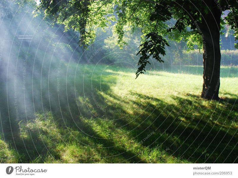 Somewhere Beautiful. Umwelt Natur Landschaft Pflanze Urelemente ästhetisch Zufriedenheit diffus Glaube Erscheinung himmlisch erhaben Romantik Waldlichtung Rauch