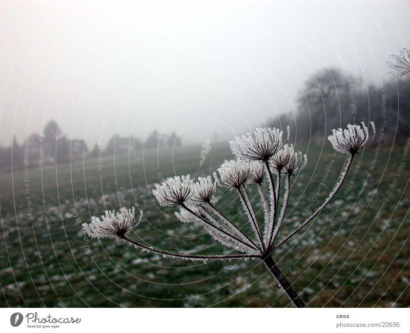 Eisblume Natur Landschaft Deutschland retten