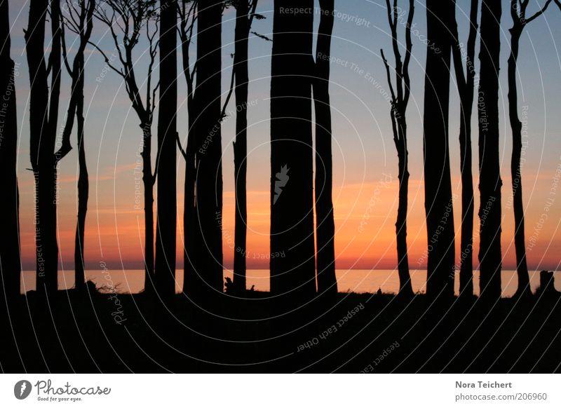 Wieder ein Tag älter ... Umwelt Natur Landschaft Pflanze Himmel Horizont Sommer Klima Schönes Wetter Baum Küste Strand Ostsee Meer träumen ästhetisch frei