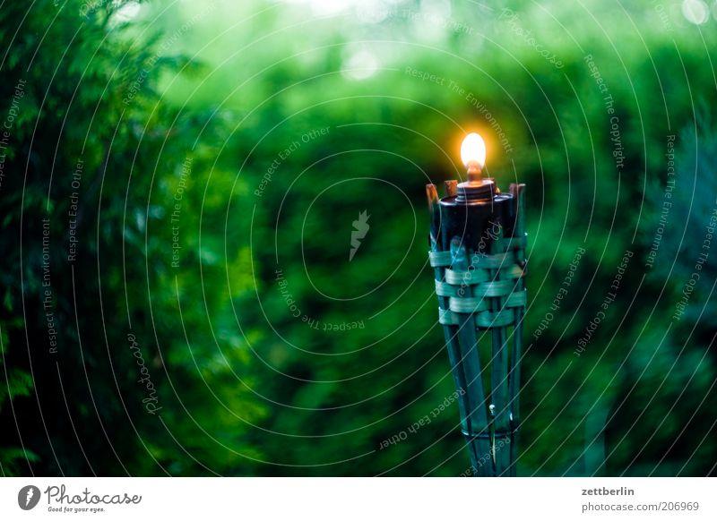 Abends im Garten Hecke dunkel Kerze Fackel Flamme Licht grün ruhig Windstille Lampe Lampenöl Gartenfest Natur Öllampe Windlicht brennen leuchten