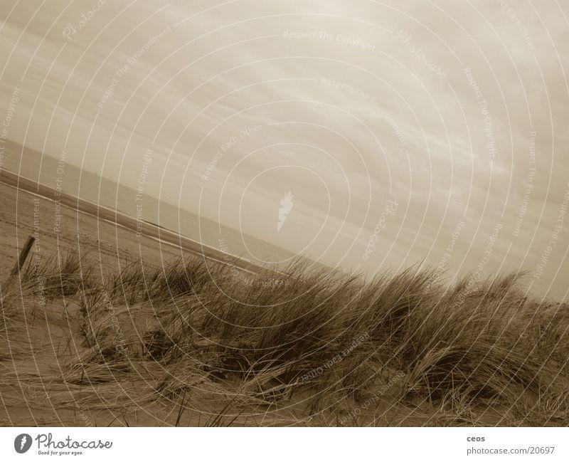 strand Strand Wolken Sandhalm Stranddüne