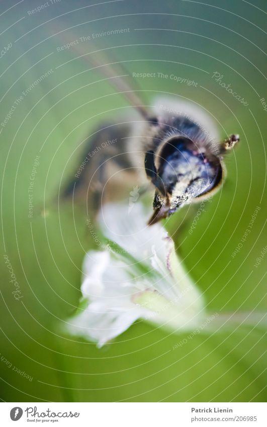 World in my eyes Natur schön Blume Pflanze Sommer Auge Tier Blüte Umwelt fliegen nah Tiergesicht Flügel Biene Wildtier