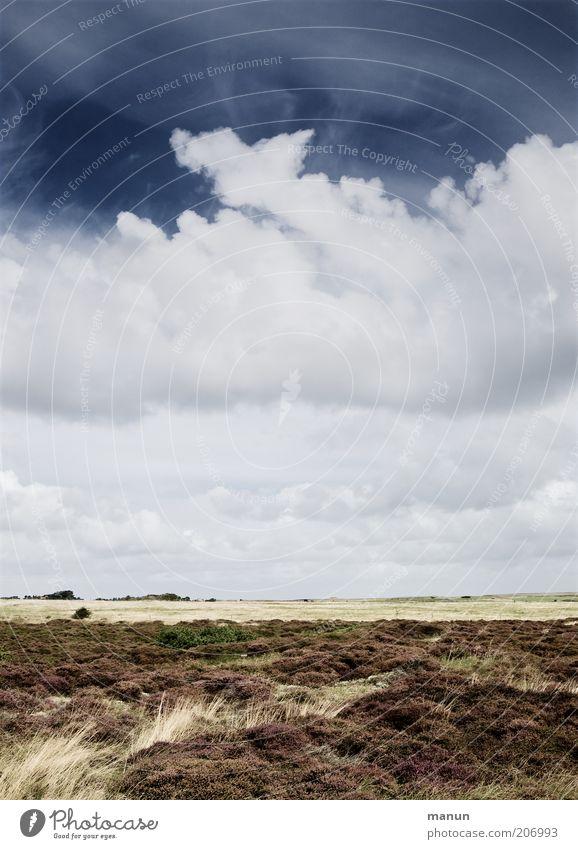 Heide Ferien & Urlaub & Reisen Tourismus Ferne Sommer Sommerurlaub Natur Landschaft Erde Wolken Wetter Gras Sträucher Wildpflanze Feld Nordsee Nordseeinsel