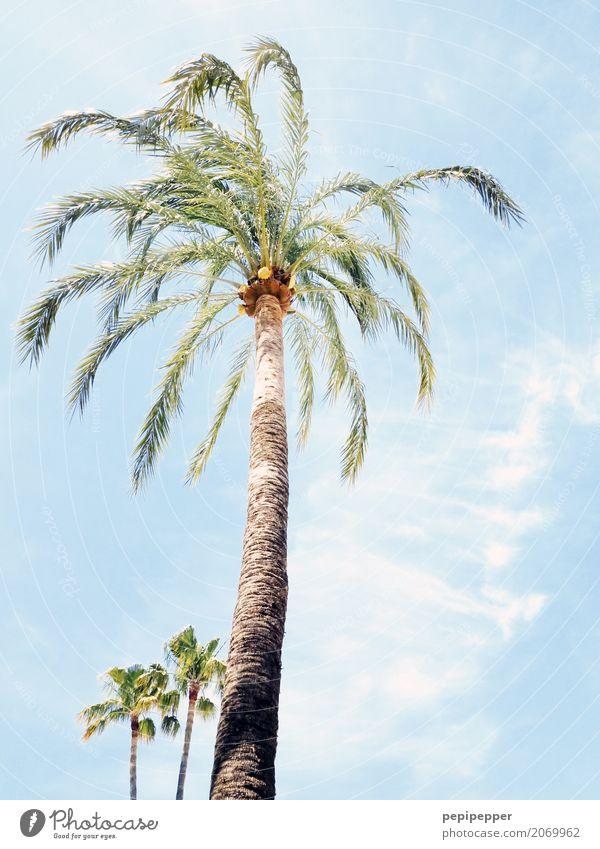 palmen Himmel Pflanze Sommer Baum Blatt Wolken Strand Umwelt Küste Holz Schönes Wetter Zusammenhalt exotisch Palme Wildpflanze
