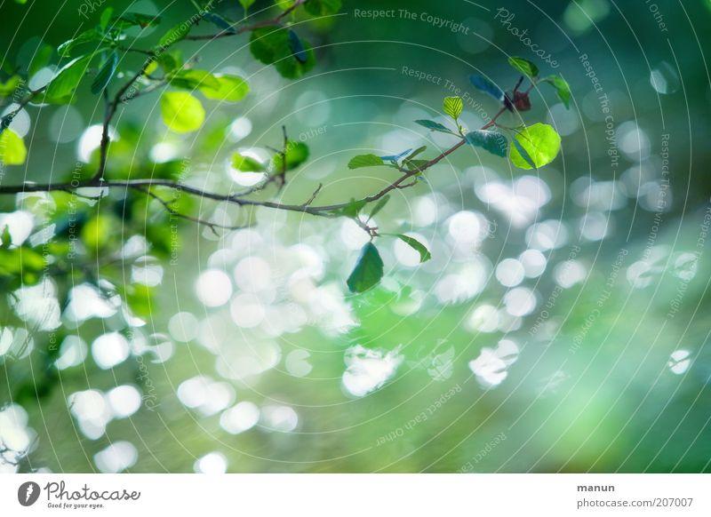 im grünen Bereich Ausflug Natur Landschaft Frühling Sommer Baum Blatt Ast Zweige u. Äste frisch natürlich Umweltschutz Farbfoto Außenaufnahme Textfreiraum unten