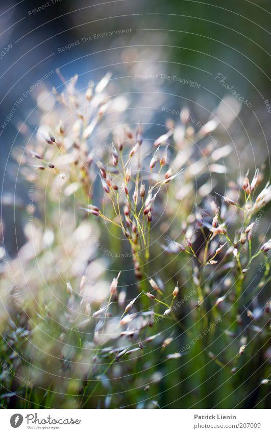 moony Natur schön Pflanze Sommer ruhig Gras Landschaft hell Wetter Umwelt ästhetisch Wachstum Sträucher zart natürlich leuchten