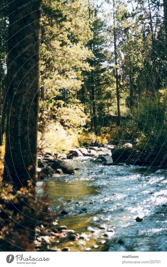 Wasser und Licht Herbst Bach