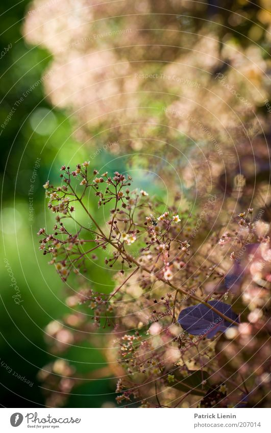 Licht der Abendsonne Umwelt Natur Landschaft Pflanze Luft Sommer Schönes Wetter Sträucher Nutzpflanze genießen hängen leuchten ästhetisch exotisch