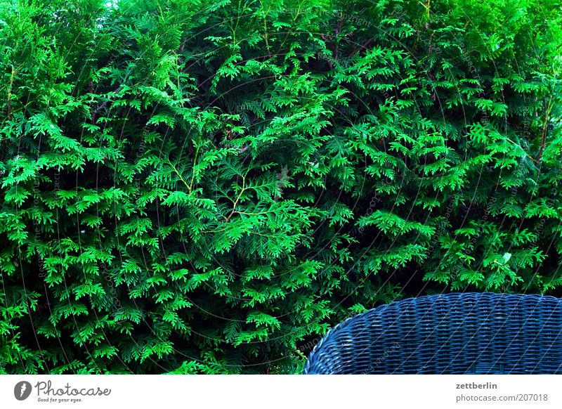 Hecke plus Sessel grün blau Garten geschlossen Ordnung Stuhl Sträucher Grenze Zaun Sitzgelegenheit Sessel Hecke Stuhllehne Begrenzung Sessellehne