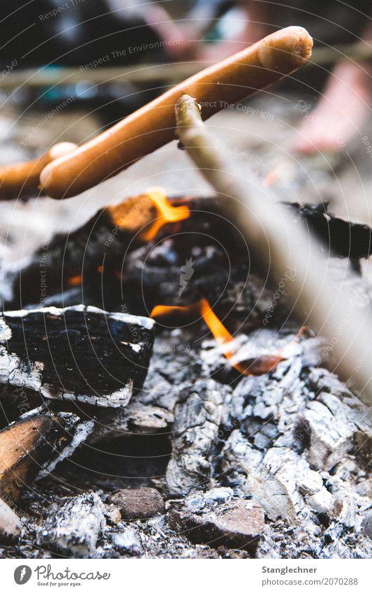 Knackiger Wiener Lebensmittel Fleisch Wurstwaren Ernährung Abendessen Fingerfood Freizeit & Hobby Grillen Feste & Feiern Natur Baum Holz Essen Völlerei gefräßig