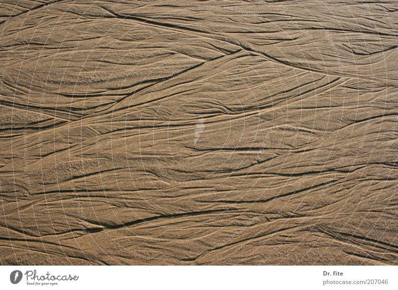 Spuren im Sand Natur Strand Hintergrundbild Erde natürlich beige Textfreiraum Erosion Strukturen & Formen wellig Sandstrand Wellenform Wellenlinie