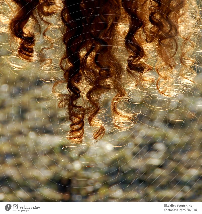 Locken Haare & Frisuren braun brünett Spirale trocknen rothaarig lockig Haarschopf Mensch Haarpflege durchleuchtet Frauenhaare