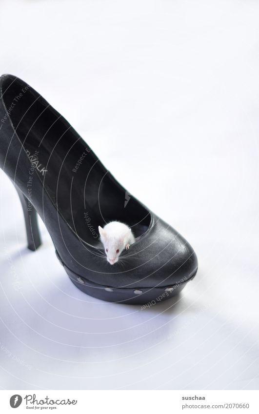 maus im schuh Maus farbmaus weisse maus Haustier Nagetiere niedlich klein zuhause Domizil Häusliches Leben hausbesetzung Schutz Angst Ekel Schuhe Damenschuhe