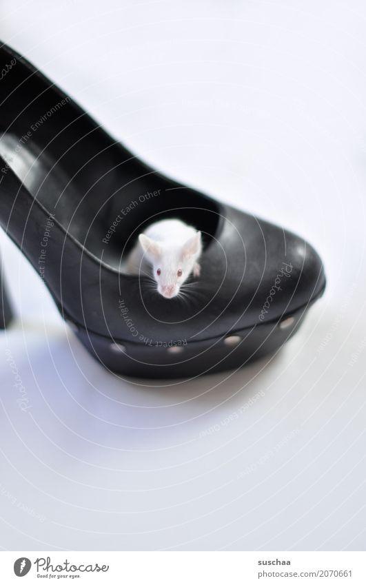maus im schuh Maus Farbmaus weisse Maus Haustier Nagetiere niedlich klein Häusliches Leben Domizil Hausbesetzung Schutz Angst Ekel Schuhe Damenschuhe Albino