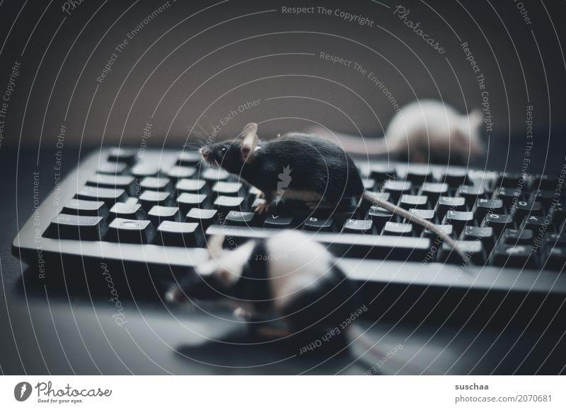 tastatur und mäuse Tastatur Computer modern Arbeit & Erwerbstätigkeit Büro moderne Kommunikation Arbeitsplatz Fortschritt altmodisch schreiben Maus Mäuse Tier
