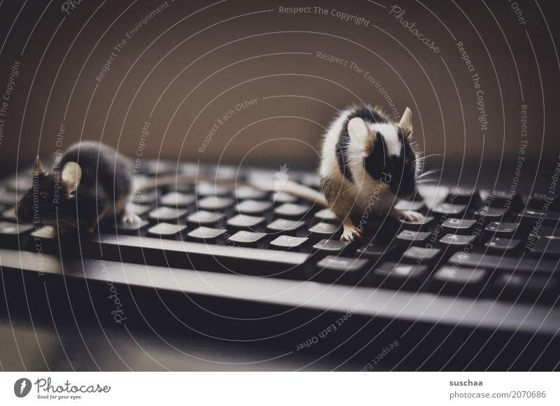 .. tanzen die mäuse auf der tastatur Tastatur Computer modern Arbeit & Erwerbstätigkeit Büro moderne Kommunikation Arbeitsplatz Fortschritt altmodisch schreiben