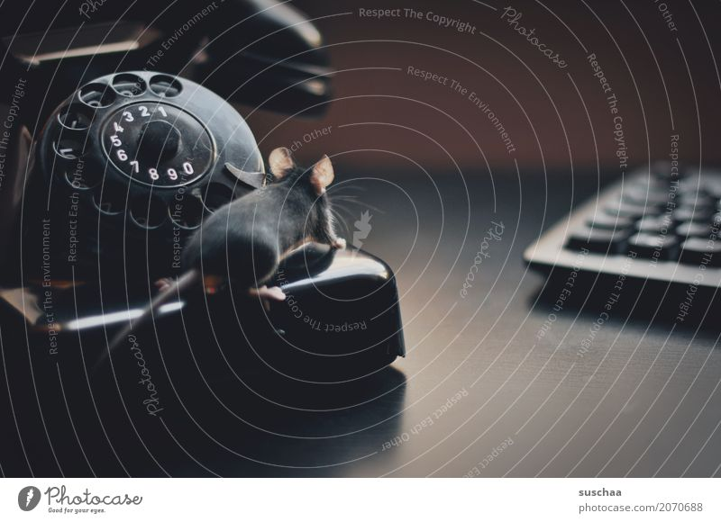 telefon (mit maus) Telefon altes telefon bakelit telefon Telefongespräch sprechen Kommunizieren Telekommunikation Kontakt Verbindung Telefonnummer wählen