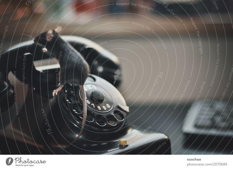 telefonieren mäuse? Maus Tier Haustier Säugetier Schwanz Telefongespräch Telekommunikation Telefonhörer altes Telefon Wählscheibe Bakelit Telefon sprechen