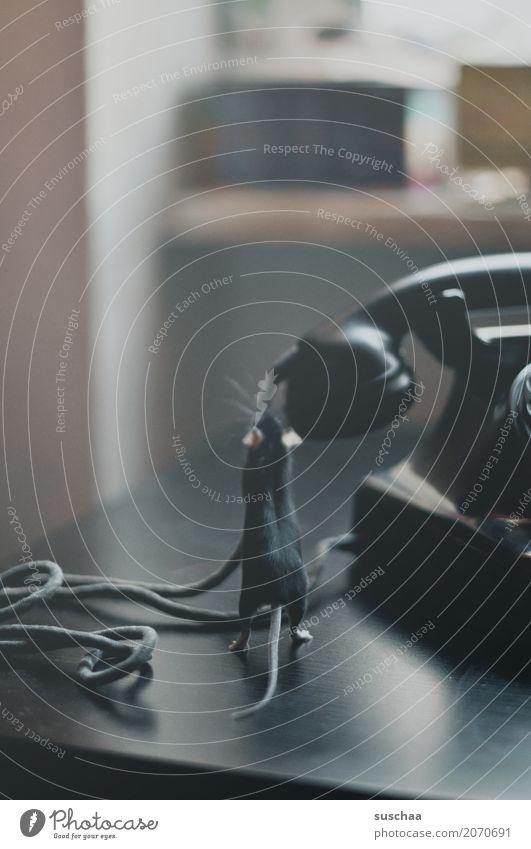 telefonieren mäuse? Maus Tier Haustier Säugetier Schwanz Telefongespräch Telekommunikation Telefonhörer altes Telefon Bakelit Telefon Kabel Höhrer sprechen