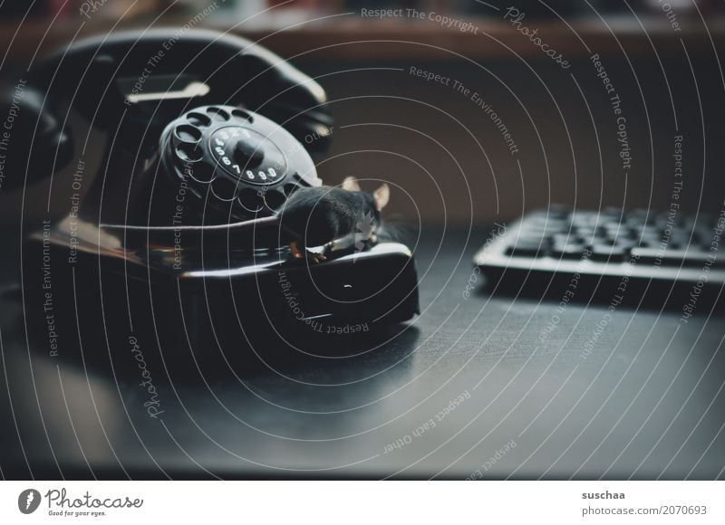 maus, telefon und tastatur Maus Tier Haustier Säugetier Schwanz Telekommunikation altes Telefon Wählscheibe Bakelit Telefon Neugier Verbindung Büro tierisch