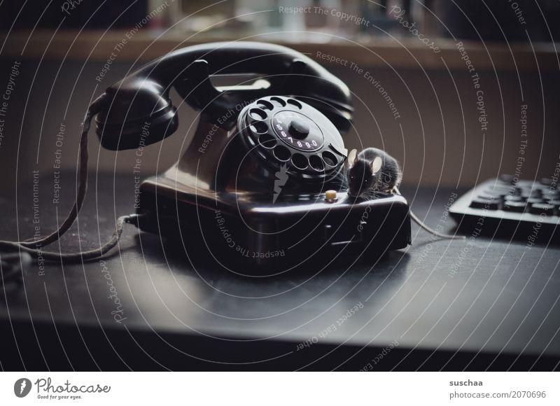 telefon (mit maus) Maus Tier Haustier Säugetier Schwanz Telekommunikation altes Telefon Wählscheibe Bakelit Telefon Neugier Verbindung Büro tierisch lustig