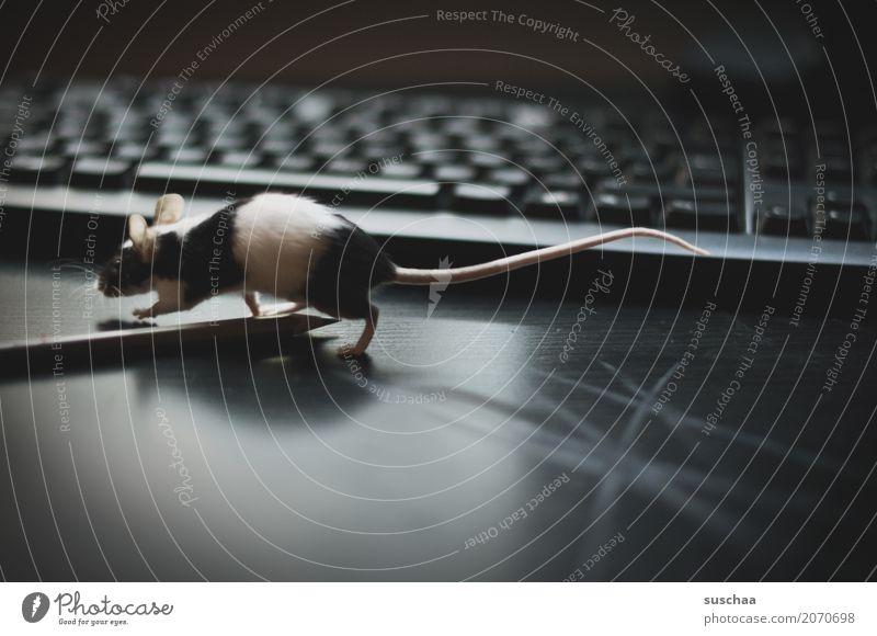 maus im büro Maus Tier Haustier Säugetier Nagetiere Neugier Büro tierisch lustig Tastatur Schreibtisch Arbeitsplatz Schreibstift niedlich winzig süß Ohr Schwanz