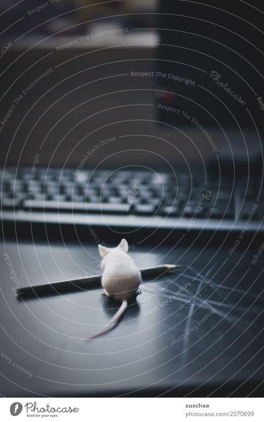 maus und stift Maus Tier Haustier Säugetier Neugier Büro tierisch lustig Tastatur Schreibtisch Arbeitsplatz Computer niedlich winzig Ohr Angst Vorsicht Ekel