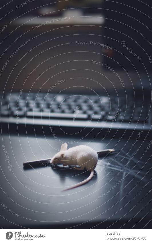 maus und stift Maus Tier Haustier Säugetier Neugier Büro tierisch lustig Tastatur Schreibtisch Arbeitsplatz Computer niedlich winzig Ohr Schwanz Angst Vorsicht