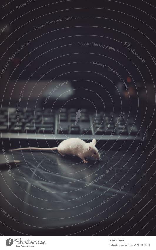 maus und tastatur Arbeit & Erwerbstätigkeit Arbeitsplatz Büro Computer Fortschritt altmodisch moderne Kommunikation Technik & Technologie Tastatur Maus Tier