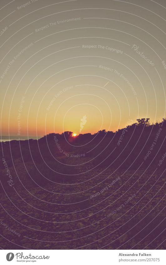 Das Ende eines Tages Pflanze Sonne Ferien & Urlaub & Reisen Meer Tourismus Sonnenaufgang Spanien Fernweh Kondensstreifen Ibiza Geröll Farbverlauf