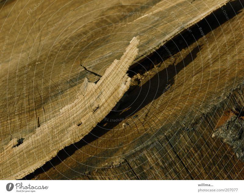 ablösung Holz braun Baumstamm Baumrinde Rest Baum fällen Splitter Späne Arbeit & Erwerbstätigkeit Baumstumpf Jahresringe Holzstruktur splittern Altholz