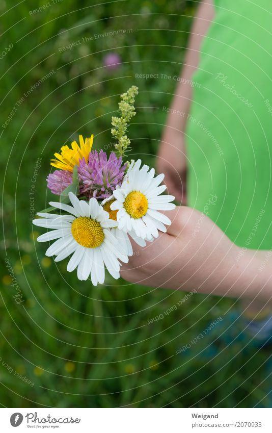 Nicht nur zum Muttertag Sommer Feste & Feiern Valentinstag Ostern Geburtstag Kind Kleinkind Hand einfach Güte Menschlichkeit trösten dankbar Gelassenheit Blume