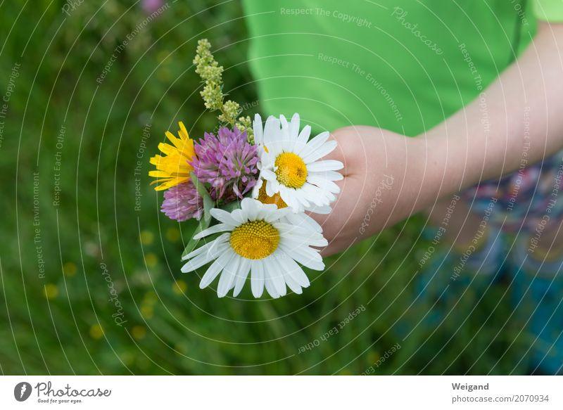 Nicht nur zum Muttertag II Mensch Kind Hand Blume Blatt Freude Blüte Freundschaft Wachstum Geschenk Hilfsbereitschaft Blumenstrauß Kleinkind nachhaltig